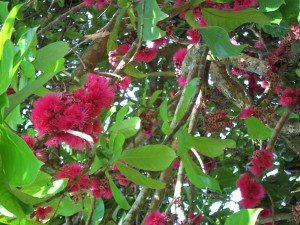 Pomarak tree